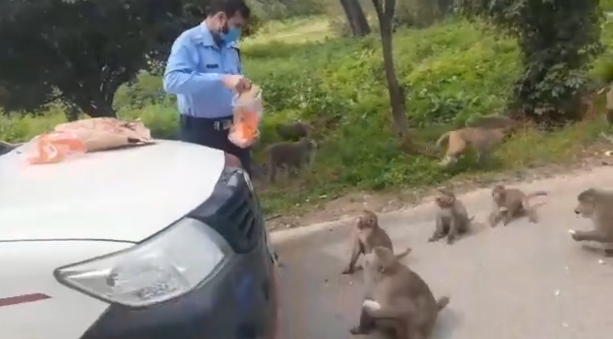 Islamabad Police Feeding Monkeys-Corona